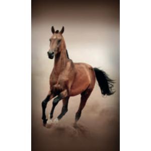 Telo Stampato Cavallo