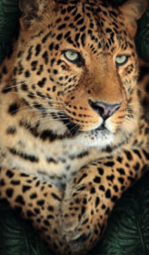Telo Stampato Leopardo